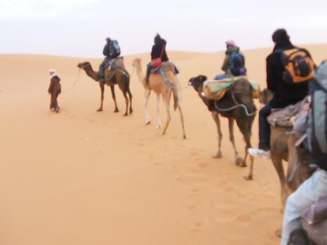砂漠で生きるラクダの秘密